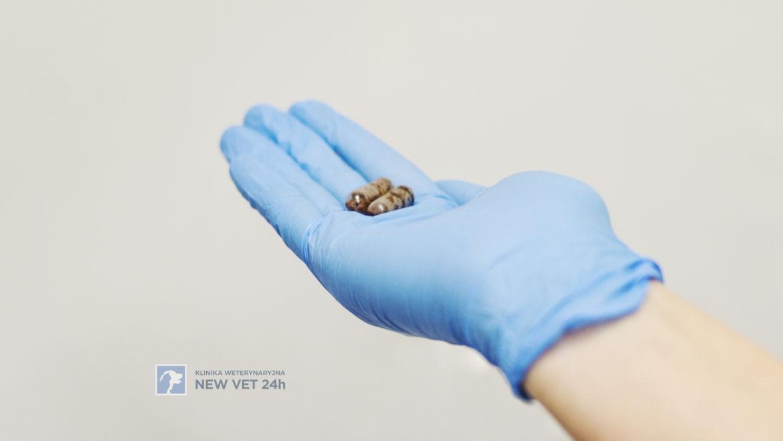 FMT – przeszczepienie mikrobioty jelitowej w Klinice New Vet 24h w Gdyni.